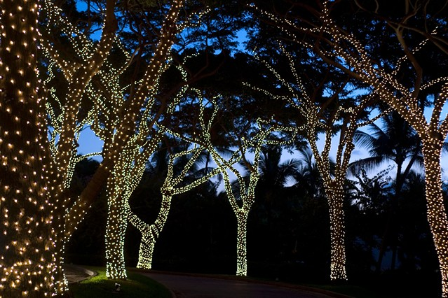 The Lights In MacArthur Park Trees Will Be Lit In November In Honor Of  Diwali.